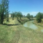 Sfalci-Valdelsa-06.2019-14
