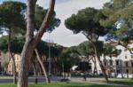 firenze_piazza_della_vittoria_pini