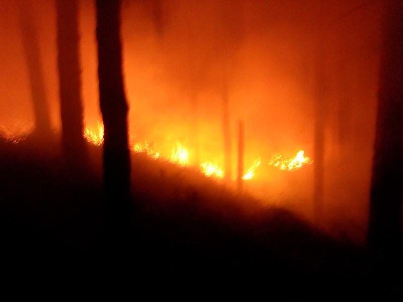 incendio_bosco_generico