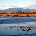 Riserva Naturale del Padule di Fucecchio - Le Morette (foto Enrico Zarri)
