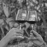 vino brindisi calice