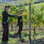 carabinieri_vigna_campagna_siena