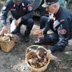 raccolta_funghi_carabinieri_forestali_2019_10_18___1