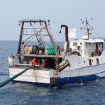 pesca plastica_03