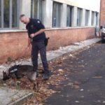 polizia_unita_cinofila_cane_antidroga_generica