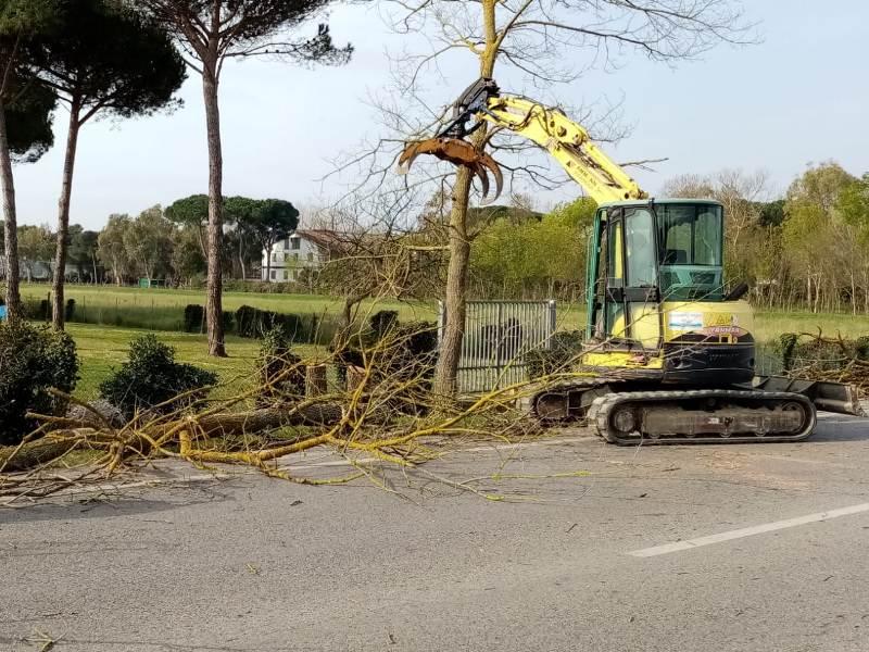 Rimossi alberi malati su viale D'Annunzio a Pisa