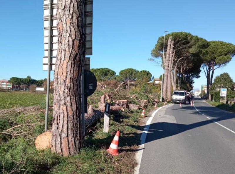 Taglio piante sulla 429, continuano i lavori a Castelfiorentino