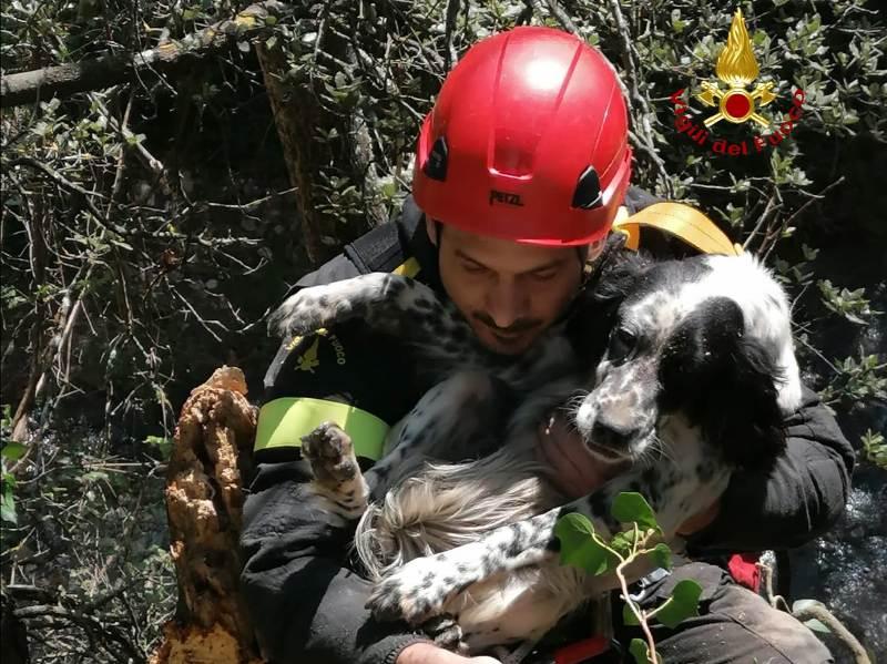 Recuperato cane caduto in un dirupo di 20 metri