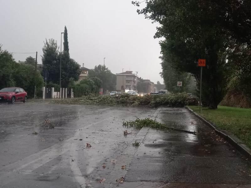 albero caduto empoli via olimpiadi