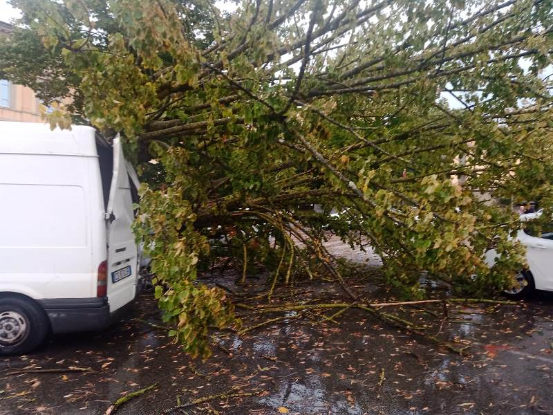 albero caduto piazza xx settembre fucecchio4