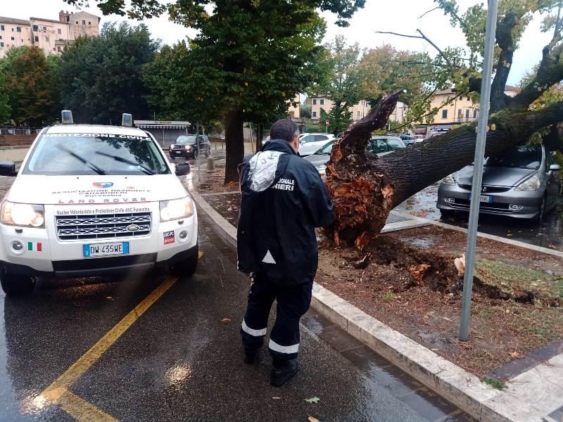 albero caduto piazza xx settembre fucecchio5
