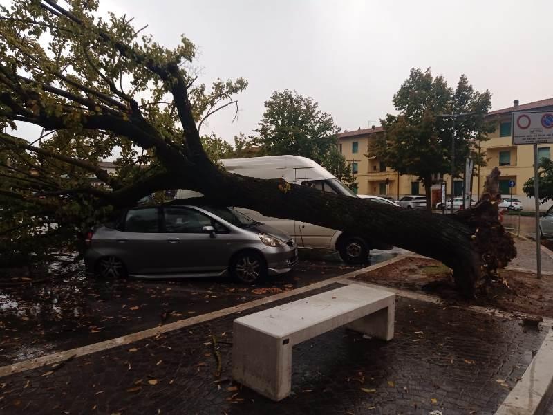 albero caduto piazza xx settembre fucecchio6