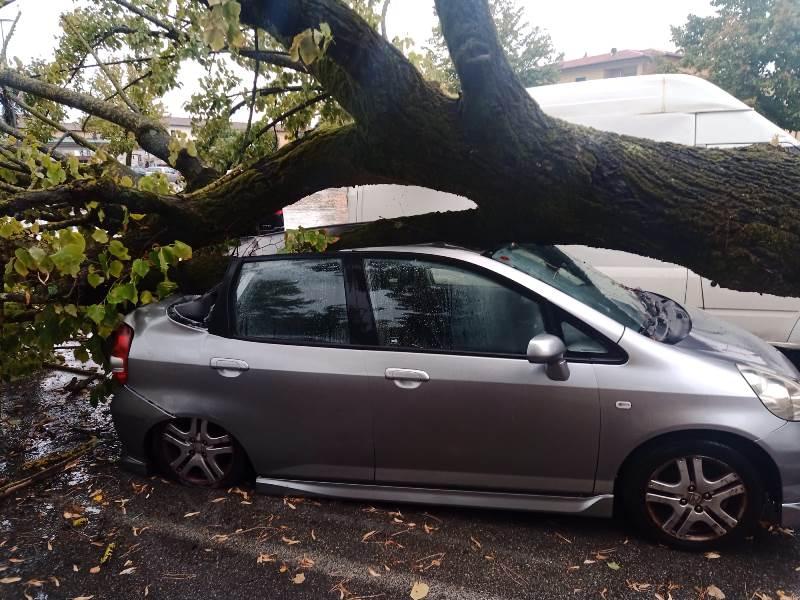 albero caduto piazza xx settembre fucecchio7