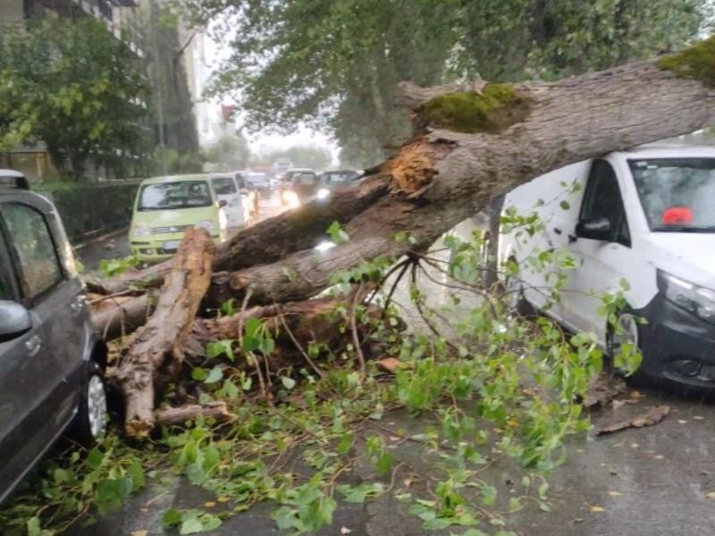 via di vittorio cade albero fucecchio